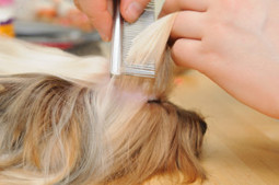 In search of a tip-top pet grooming? Choose wise - Colma Classic Grooming   Colma Classic Grooming   Scoop.it
