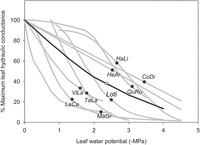 Why are leaves hydraulically vulnerable? | Plant Gene Seeker -PGS | Scoop.it