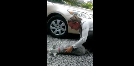 Heartwarming reunion: Dog nearly passes out from overwhelming joy | Pet Health | Scoop.it