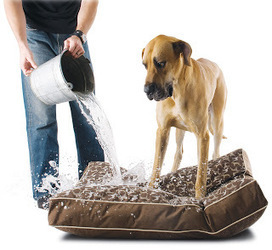 50 Shades Of Mess: How To Deal With Pet Cleaning Problems? | home | Scoop.it