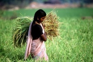 India's Green Revolution | APHG Unit V: Agriculture & Rural Land Use | Scoop.it