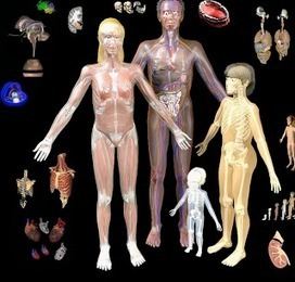 BodyMaps- A Great Tool to Explore Human Body in 3D ~ Educational Technology and Mobile Learning | The Bridge | Scoop.it