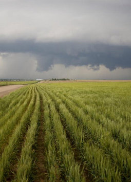 Climate Change Increases Risk of Crop Slowdown in Next 20 Years | Tetra Verde | Scoop.it