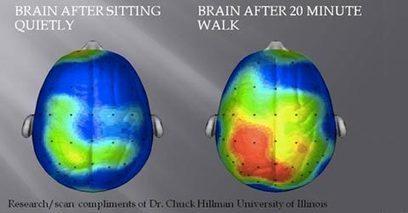 Treenaaminen tekee onnelliseksi – laiskan ja aktiivisen aivoissa huikea ero - Stara | Liikunta | Scoop.it