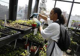 Agricultura urbana mejora educación y alimentación de barrio latino - Estados Unidos - | Cultivos Hidropónicos | Scoop.it