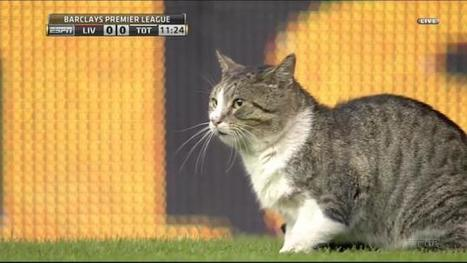 Cat interrupts Liverpool soccer game | Sports | Scoop.it