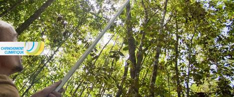 INRA - Le climat change : la nature et l'agriculture aussi ! | AGRONOMIE VEGETAL | Scoop.it