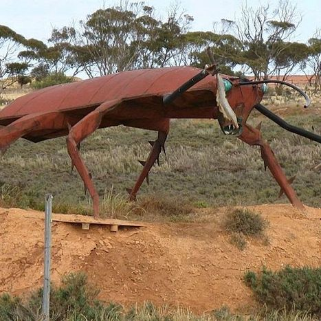 Giant cockroach moves into Adelaide | Nepalese Recipe Blog | Scoop.it