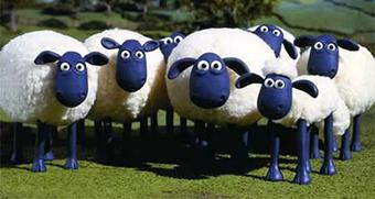 The Wonders of Wool | Just Bedding Blog | Bed Linen | Scoop.it