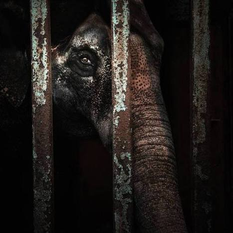J OTA - Cage And Eyes Picture Of The Week - ONE EYELAND   What Surrounds You   Scoop.it