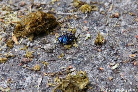 Les anti-parasitaires pour chevaux ont un fort impact sur la faune de Fontainebleau | EntomoNews | Scoop.it