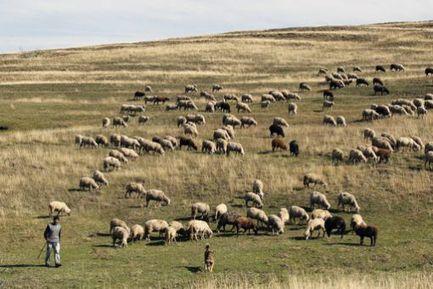 Roumanie : les investisseurs étrangers se ruent sur les terres agricoles   Confidences Canopéennes   Scoop.it