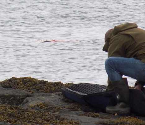 Exposed: the inhumane shooting of hundreds of seals | All about water, the oceans, environmental issues | Scoop.it