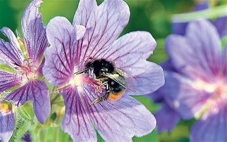 Bee-friendly flowers: in pictures - Telegraph | 100 Acre Wood | Scoop.it