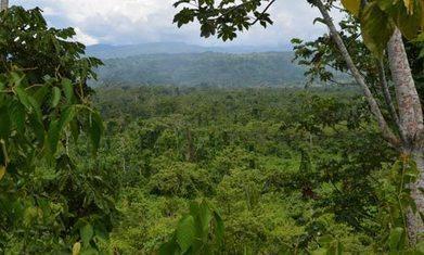 Le Programme Amazônia de Natura Brasil | Natura Brasil et moi | Scoop.it