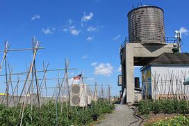 The Brooklyn Grange Pool | Économie circulaire locale et résiliente pour nourrir la ville | Scoop.it