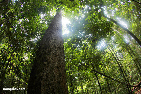 Rainforests: 10 things to watch in 2015 | Kemerid - Chimie verte , chimie durable | Scoop.it