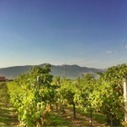 Classic wineries of Northern Greece | ELLOINOS | travelling 2 Greece | Scoop.it