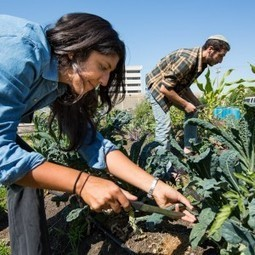San Francisco's Jewish farm needs more room to grow | Jewish Education Around the World | Scoop.it