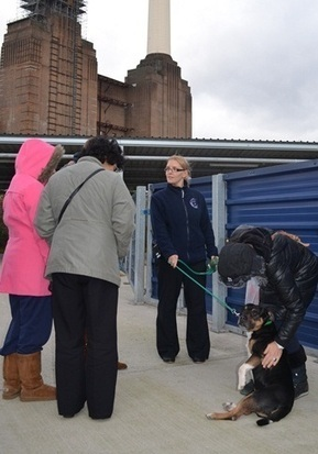 Behind-the-screens tours at Battersea | Spanimals | Scoop.it