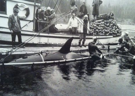 """Orcas deceased in captivity """" The deadly history of captive killer whales. """" 
