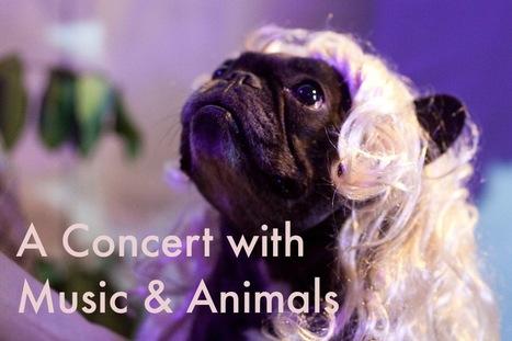Denver Night: A Concert With Music and Animals | Chris Kallmyer | DESARTSONNANTS - CRÉATION SONORE ET ENVIRONNEMENT - ENVIRONMENTAL SOUND ART - PAYSAGES ET ECOLOGIE SONORE | Scoop.it
