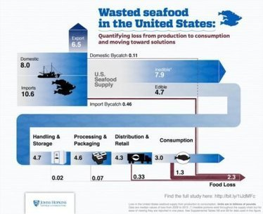 Nearly half of U.S. seafood supply is wasted, study shows: Waste adds to other problems threatening global seafood resources such as overfishing, pollution and climate change | Food issues | Scoop.it