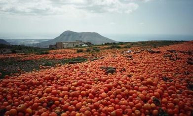 FOOD LOSS AND WASTE: A THREAT TO SUSTAINABILITY | sustainability | Scoop.it
