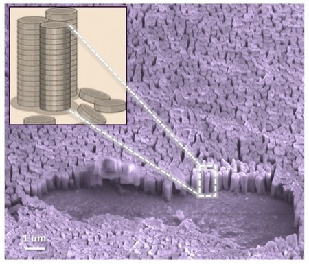 """""""Nanograss"""" boosts the efficiency of organic solar cells 