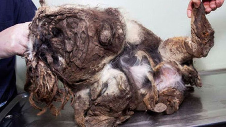 A Passer-by Thought This Was A Pile Of Trash. I've Never Seen A More Shocking Transformation. | Animal Cruelty | Scoop.it