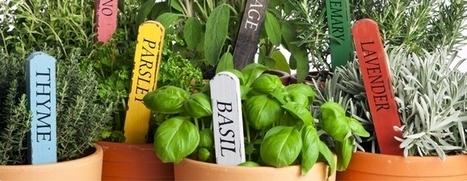 | Botany Logic | Annie Haven | Haven Brand | Scoop.it