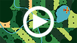 New videos on ecosystem services of the tropical coastal forests of the Gulf of Mexico | The International Tropical Timber Organization (ITTO) | Ecosystèmes Tropicaux | Scoop.it