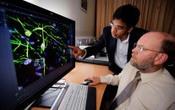 MND stem cell study identifies TDP-43 astrocytes as not toxic to motor neurones | Motor Neurone Disease | Scoop.it