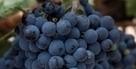 Dans les vignes du Liban | Charliban Lebnen | Scoop.it