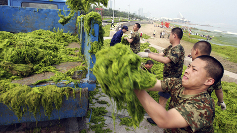 Spewing sewage into the ocean is bad: toxic algae and man-sized jellyfish edition | China's Water Crisis | Scoop.it