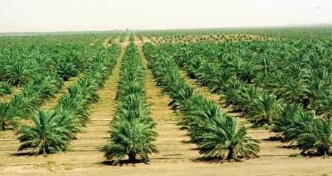 Agriculture oasienne: La FAO appuie l'OASIL | CIHEAM Press Review | Scoop.it