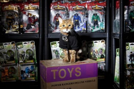 12 Jobs People Decided to Give to Cats | Cats Kitties Felines | Scoop.it