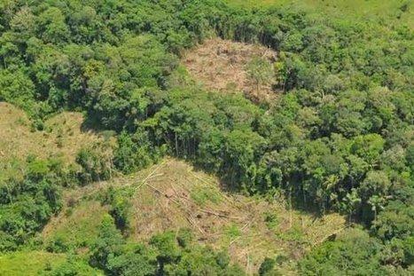 Los 500 responsables de la deforestación   MOVUS   Scoop.it