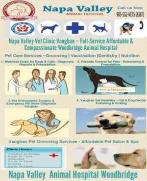 Napa Valley Vet Hospital - Complete Veterinary Care Services | Napa Valley Animal Hospital | Scoop.it