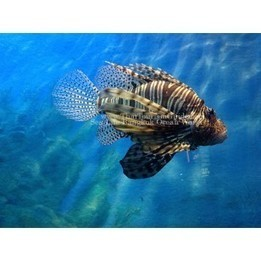 Sea Life Bangkok Ocean World | Discover amazing Thailand | Scoop.it