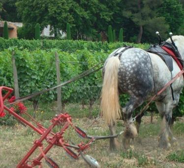 Actualité > Economie > Réglementation > Vin bio : le cheval de la ... - Vitisphere.com   vin et société   Scoop.it