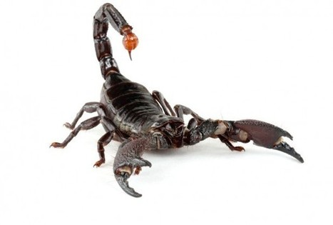 Earliest Known Scorpion Fossil Discovered In South Africa - RedOrbit | Why Geology Rocks | Scoop.it