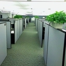 Think Outside the Cube: Why the Office Isn't the Best Workspace | Life @ Work | Scoop.it