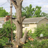 Tree Service Company in Lake City, FL   Busy Bee Trees and More