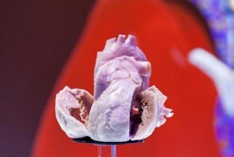 Cientistas constroem tecido cardíaco com proteína das teias de aranha | Linguagem Virtual | Scoop.it