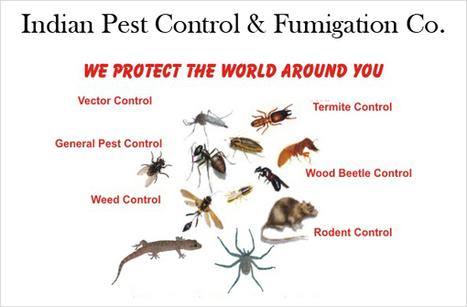 Herbal Pest, Termite, Rodent Control Delhi NCR | Herbal Pest Control Delhi NCR | Scoop.it