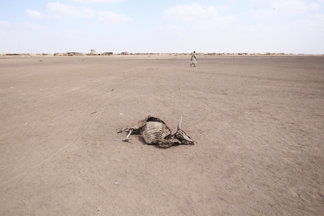 Climate change is sending Africa's agriculture crisis into a tailspin | FANRPAN | Scoop.it