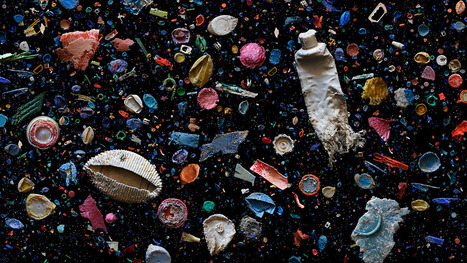 Beautiful Photos Of The Ocean's Deadly Plastic | Sustainable Futures | Scoop.it