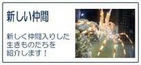 【いおワールド かごしま水族館】   Dolphins   Scoop.it
