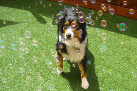 9 Camps and Retreats to Help Your Pet Sort Out Its Existential Crisis - TIME | Dogs | Scoop.it